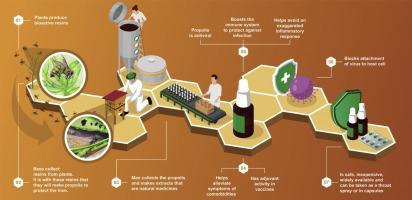 Propolisul și potențialul său împotriva mecanismelor de infecție cu SARS-CoV-2 și boala COVID-19